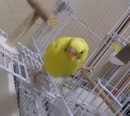 小鳥184