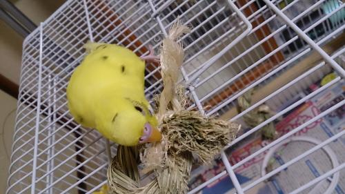 小鳥185