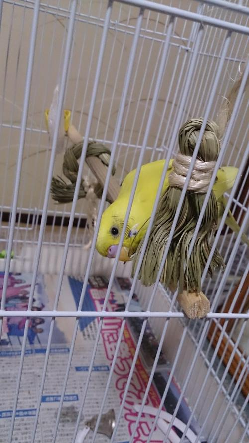 小鳥186