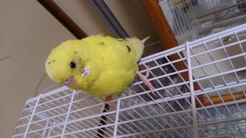 小鳥188