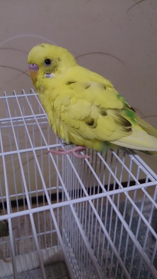小鳥190