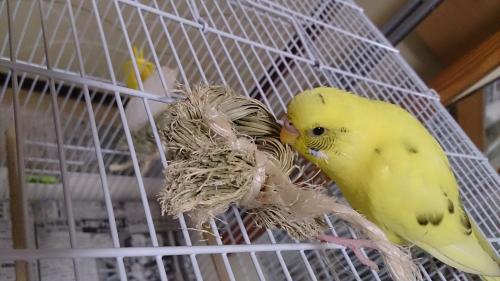 小鳥191