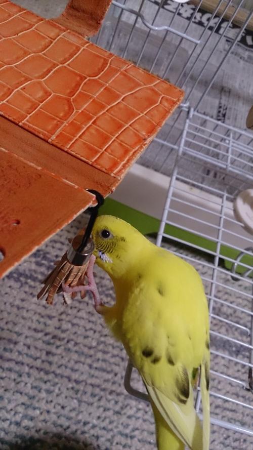 小鳥194