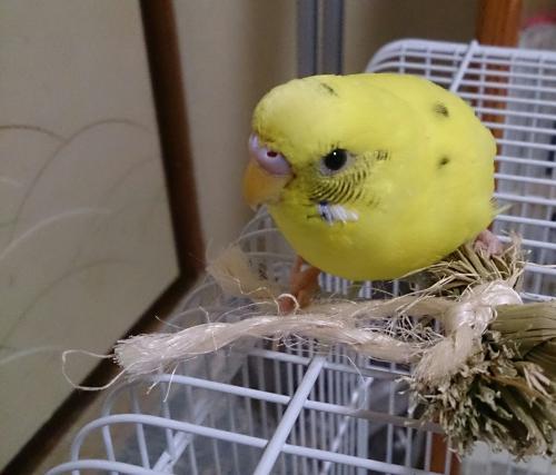 小鳥195