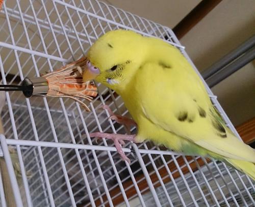 小鳥198