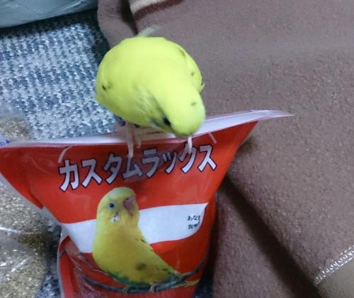 小鳥199
