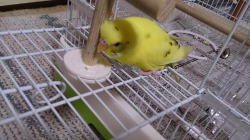 小鳥200