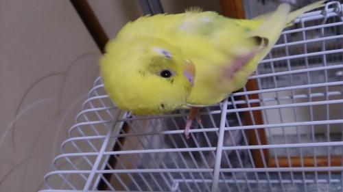 小鳥201