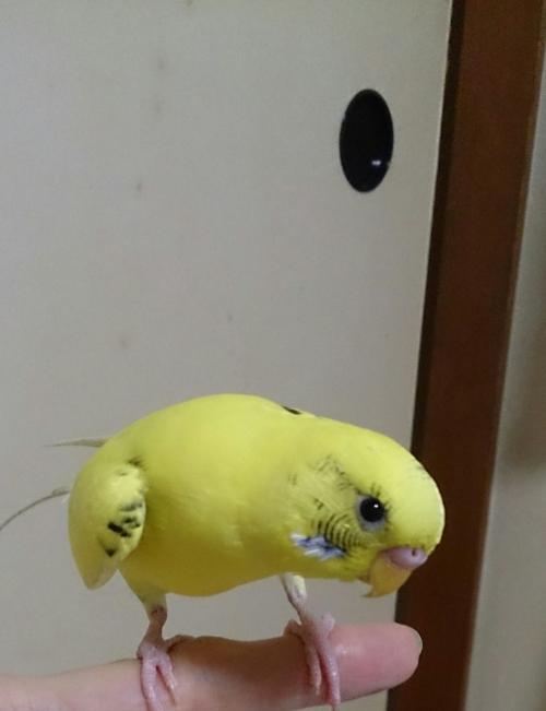 小鳥202