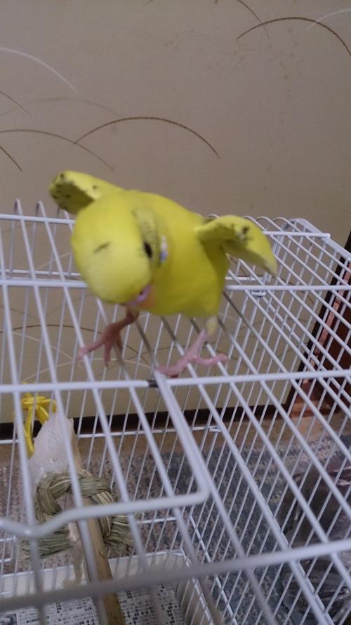 小鳥203