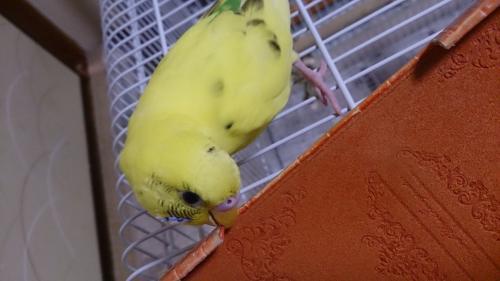 小鳥204