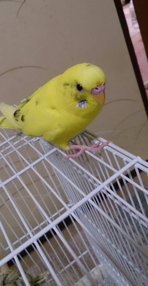 小鳥208