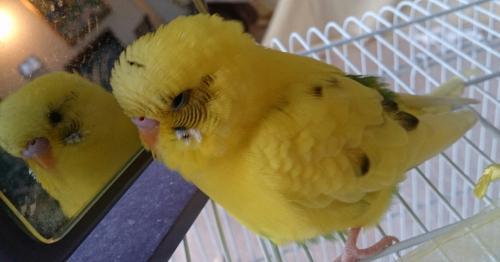 小鳥210