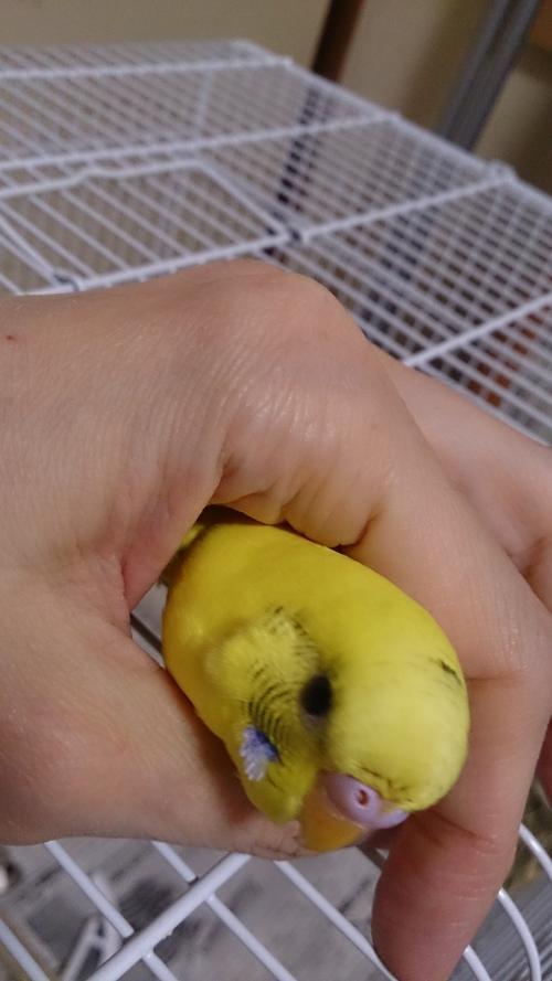 小鳥214