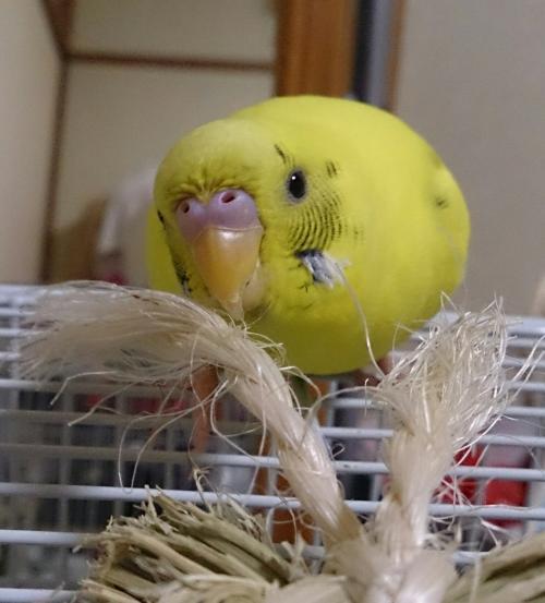 小鳥220