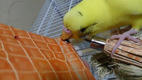 小鳥221
