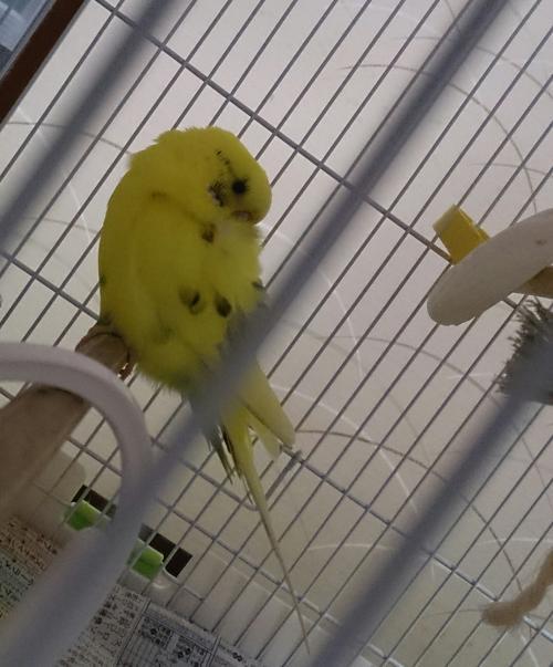 小鳥224