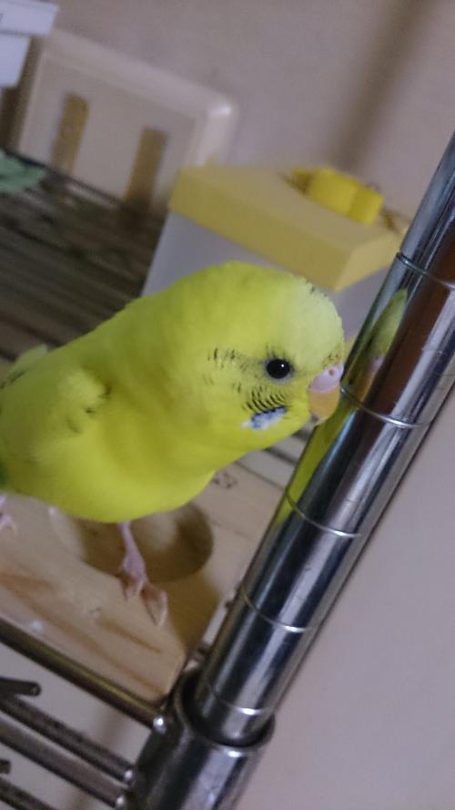 小鳥226