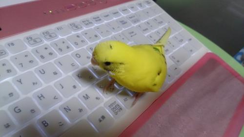 小鳥233