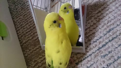 小鳥237