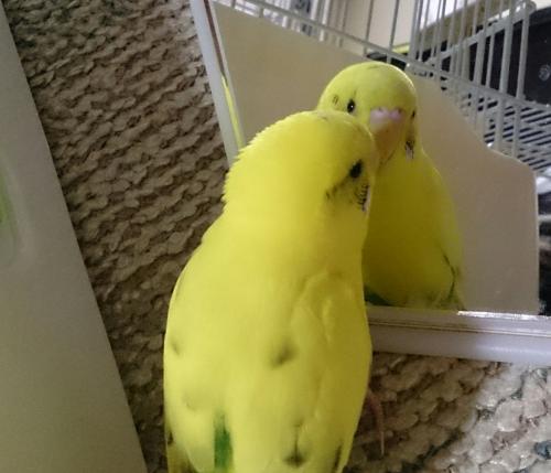 小鳥238