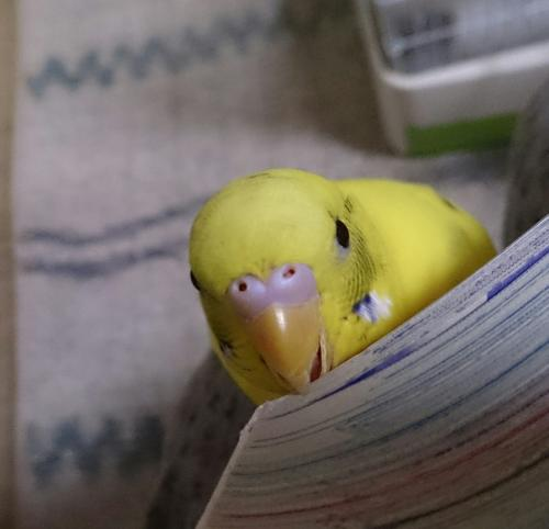 小鳥240