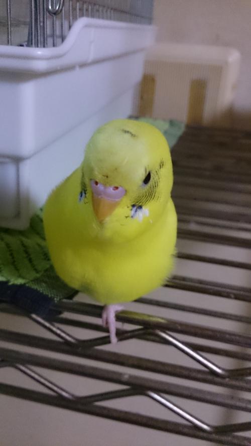 小鳥242