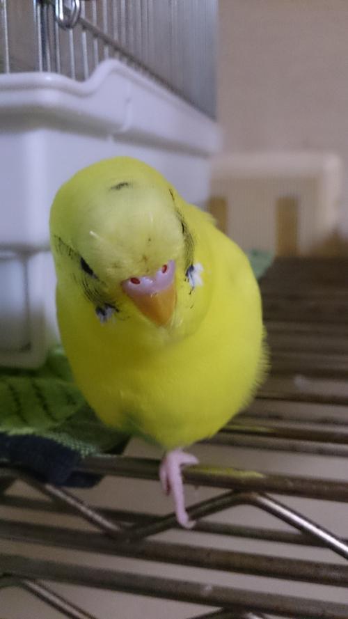 小鳥243