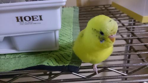小鳥244