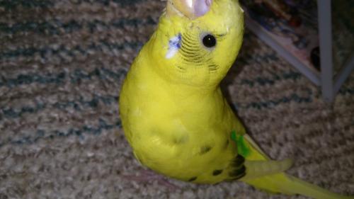 小鳥247