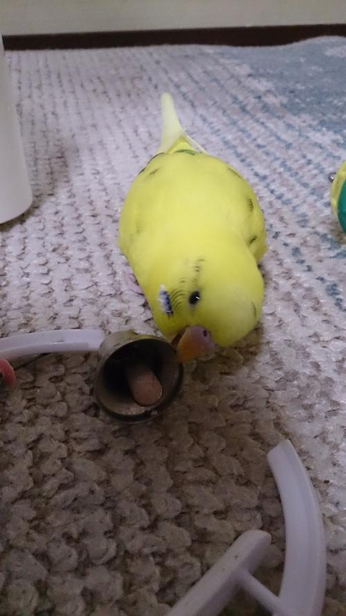 小鳥250