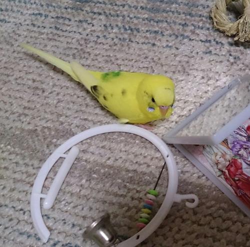 小鳥251