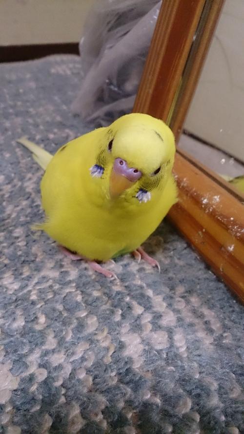 小鳥253