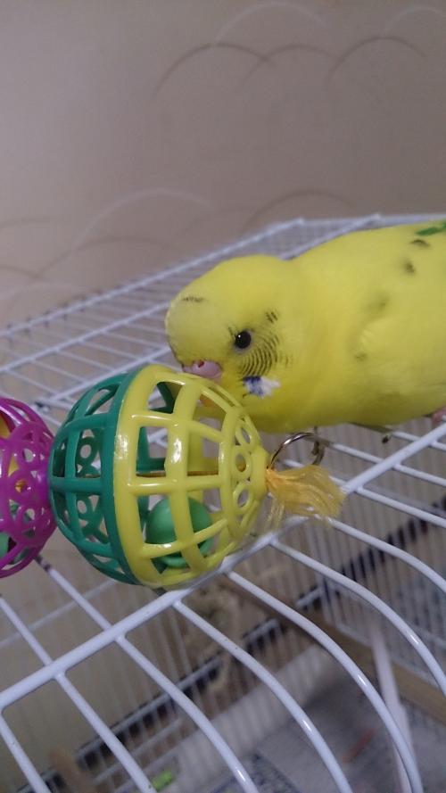 小鳥256