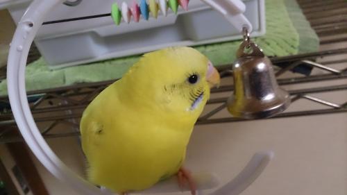 小鳥261