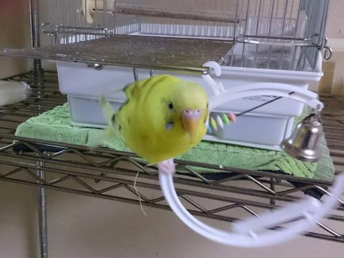 小鳥262