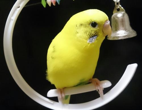 小鳥267