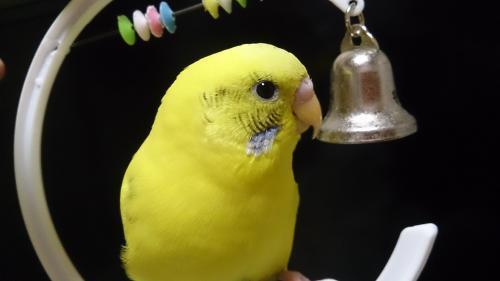 小鳥268