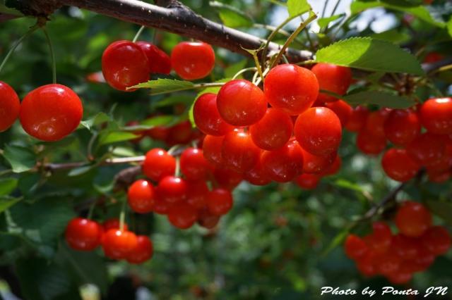cherry2016-0003ss.jpg