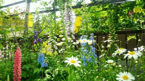 2016初夏の庭