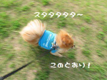 16160804.jpg