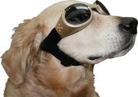 犬ゴーグル