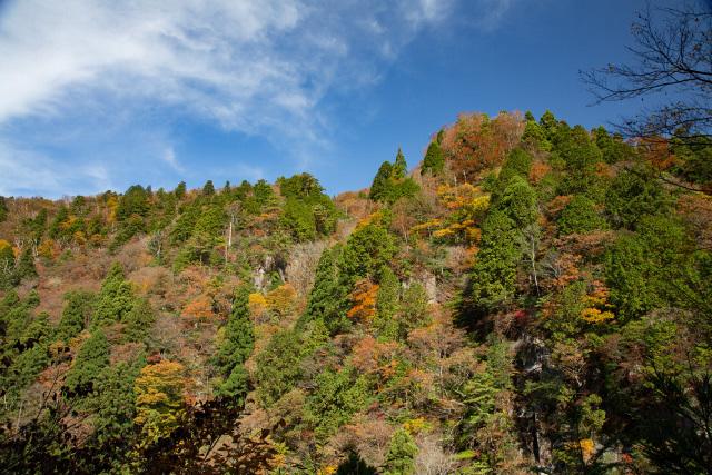 鳥取県智頭町 芦津渓谷 紅葉