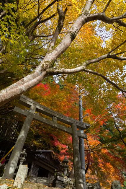 板井原集落の秋 向山神社 紅葉