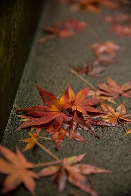 島根県安来市 清水寺の秋