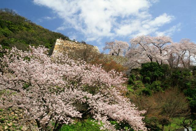 鳥取市 久松公園 桜