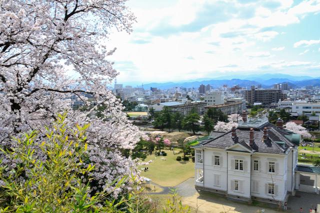 久松公園 桜 仁風閣 鳥取