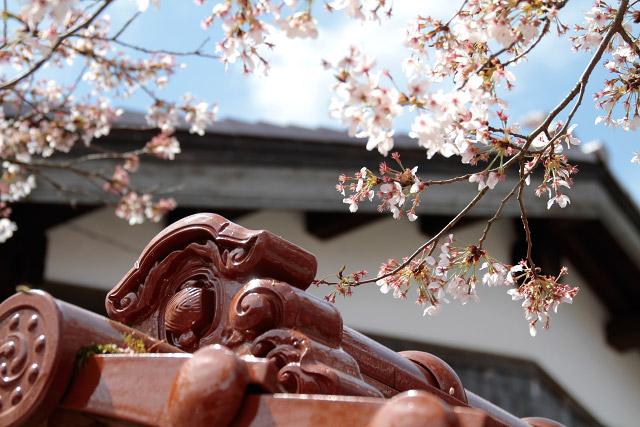 岡山県真庭郡新庄村 がいせん桜