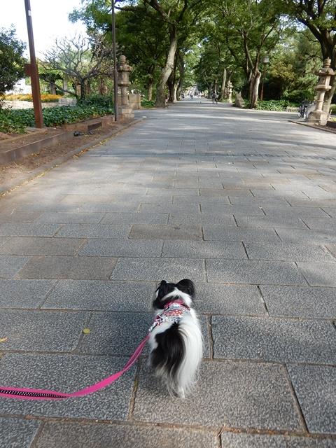 住吉公園散歩