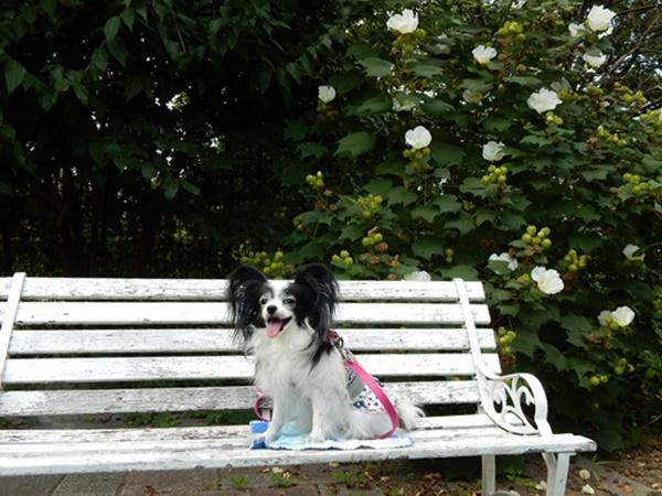 白いベンチで